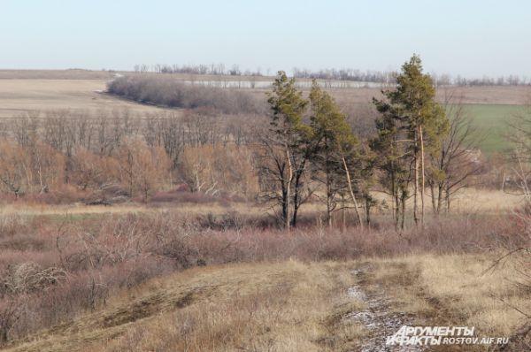Олени спрятались в колючих кустарниках и наблюдают за нами. Вдалеке можно увидеть федеральную трассу М-4 Дон. Проезжающие водители из Ростова на Москву даже не подозревают, что рядом живет европейский олень. Это самое южное его место проживания.