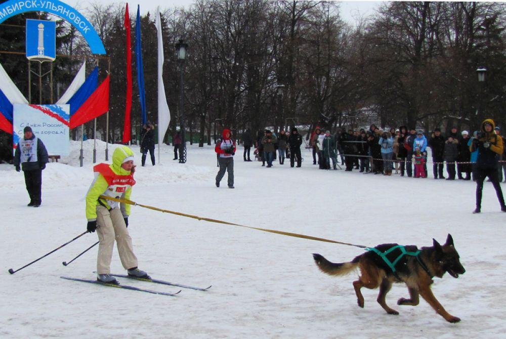 В соревнованиях могли участвовать собаки любых пород