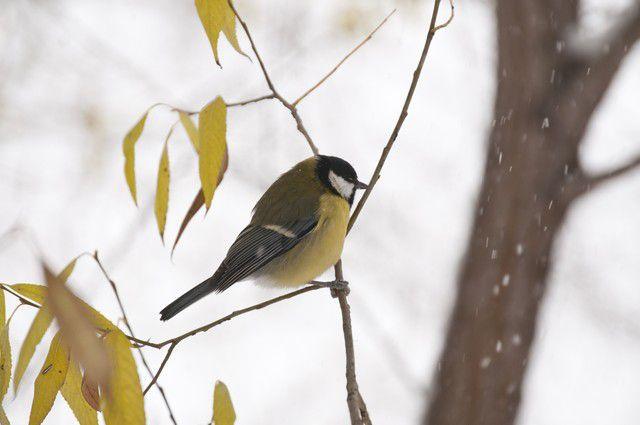 Птицам зимой сложнее искать корм.