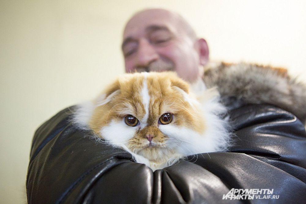 Погладь кота!