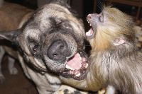 Дружба возможна между любыми животными.