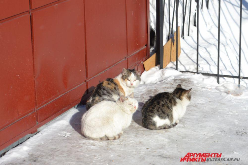 Скоро на базе «Лесной» стало заметно теплее, и даже работники местного ООО «Мышь не пробежит» вышли погреться на солнышке.