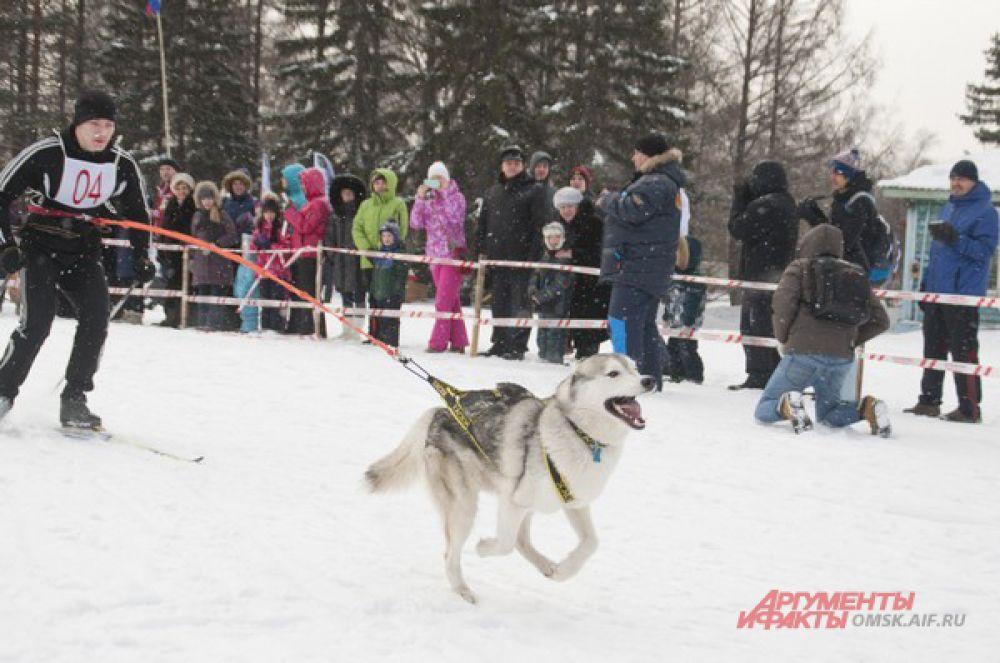 В Омске состоялись гонки на собаках