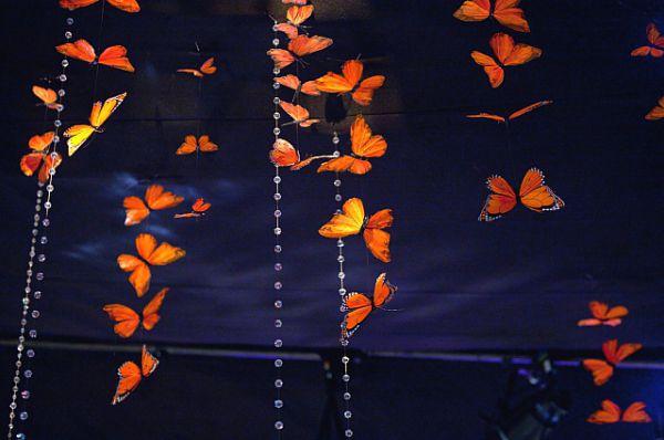 Туляки часто говорят, что им в жизни не хватает позитива и доброты, может, сад бабочек – выход?