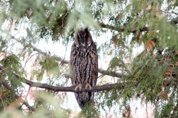 Раньше совы водились в Центральном парке города