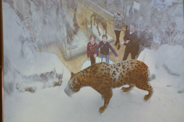 Недавно в музее была открыта еще одна музейная инсталляция, позволяющая увидеть доисторических животных