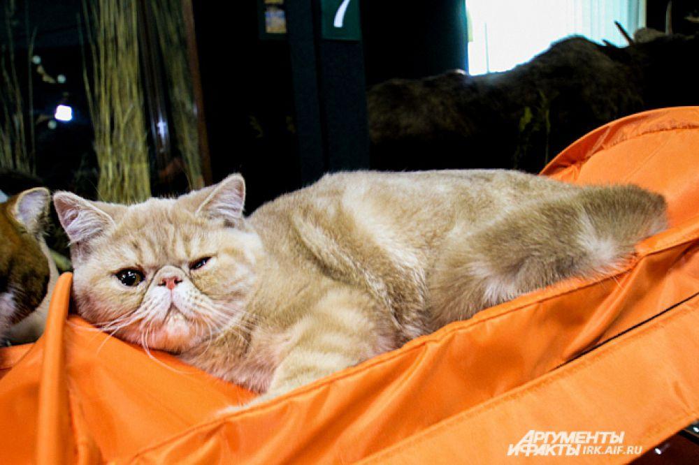 Этот хитрый кот подмигнул нашему фотографу.