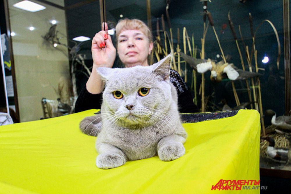 Вы все еще не уверены, видели ли вы когда-нибудь котов с улыбкой?