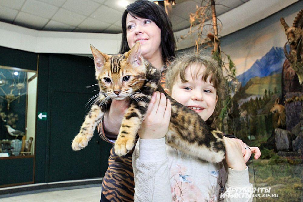 Подержать на руках не выставочных кошек не возбранялось.