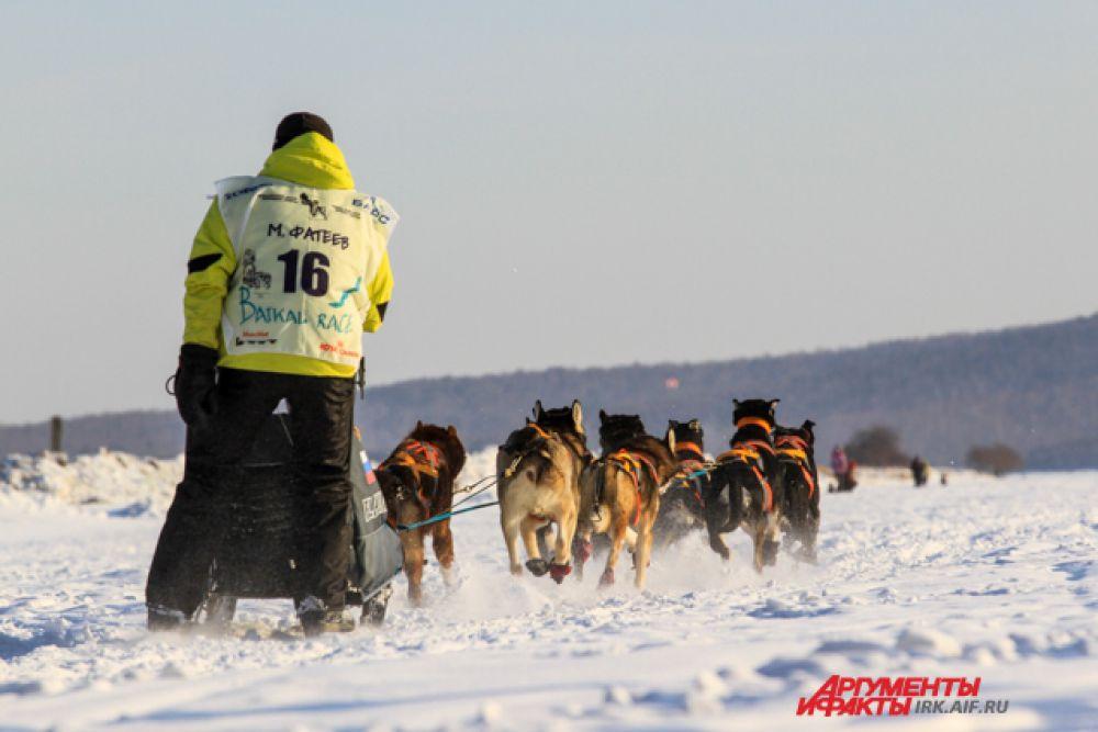 Для этих собак бег - смысл жизни.