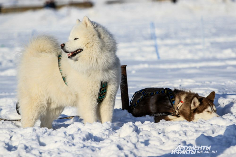 Подобные мероприятия - отличная возможность пообщаться с собаками.