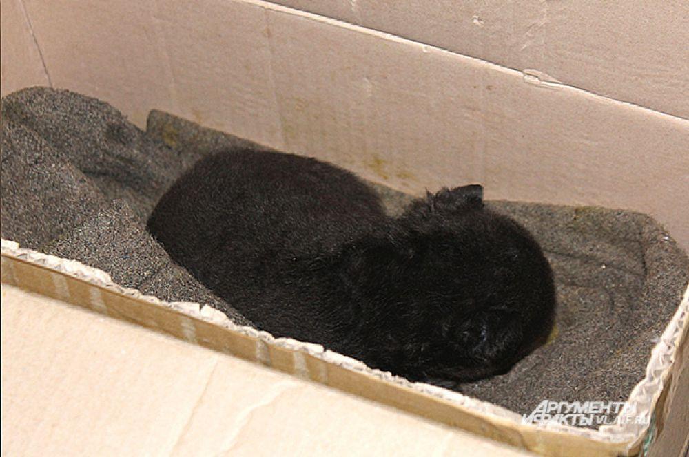 Его так и нашли - спящим в коробке на шерстяном одеяле.