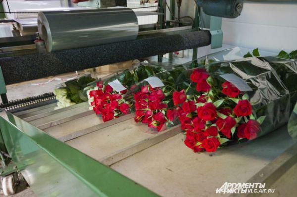 В Волгоградском розарии выращивают 24 сорта роз.