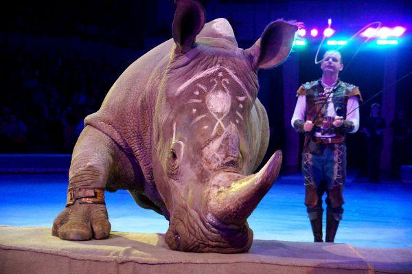 «Дрессированный носорог» Сергея Нестерова.