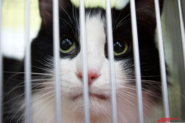 Отдельный стенд общественной организации защиты животных «Дозор» расположился в самом центре выставки. Каждый желающий мог сделать благое дело – взять котёнка из приюта.