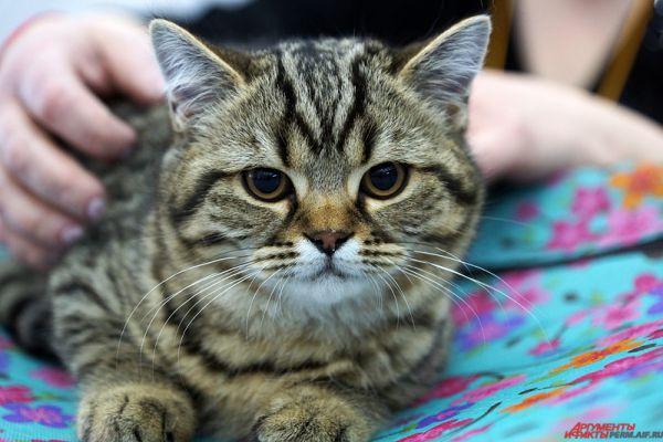 Любой желающий мог приобрести понравившегося котенка, а также проконсультироваться со специалистом по поводу ухода и содержания.