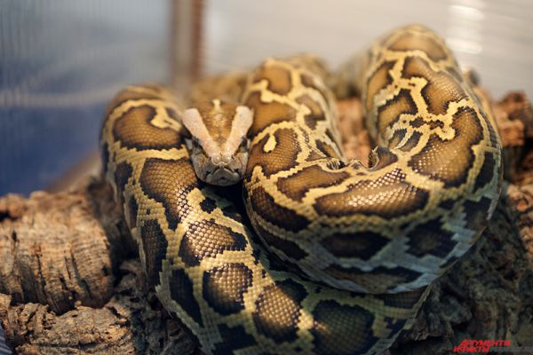 Здесь же можно было увидеть и террариумы с экзотическими животными: змеями, тарантулами, ящерицами.