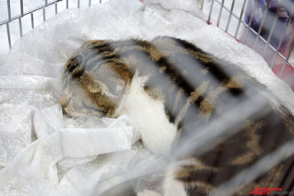 Многие кошки лениво реагировали на потоки проходящих мимо людей. Большинство из них мило дремало на мягких одеялах.