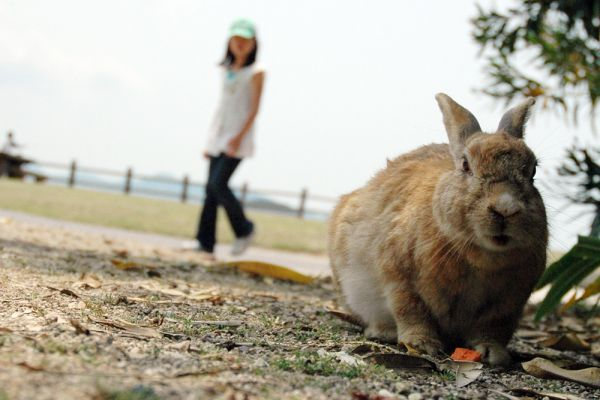 Добраться до Острова кроликов можно на пароме из города Такехара или других близлежащих поселков.