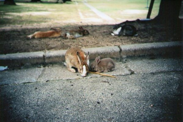 В настоящее время Остров кроликов очень популярен среди туристов и ежегодно принимает около 100 тысяч посетителей.