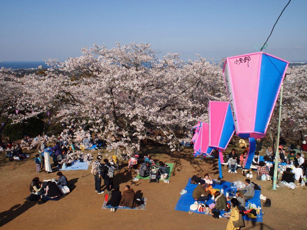 «Икки» - это особый ритуал, который происходит во время ханами. Это своего рода соревнование, определяющее того, кто может выпить максимальное количество сакэ и при этом устоять на ногах.