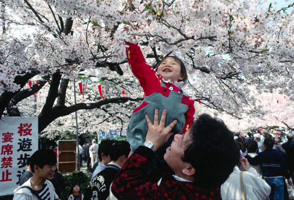 Праздник ханами можно сравнить с маленьким паломничеством: ведь японцы стекаются из разных мест в определенные парки с целью воспринять прекрасное и ощутить его мимолетность, а затем возвратиться в привычные будни.
