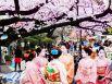 Горная слива, завезенная в Японию из Китая, начинает свое цветение раньше сакуры: возможно, именно поэтому ханами вначале посвящали ей. Однако с конца 9 века, когда общество в Японии стало заботиться о приобретении национальной самобытности и зависимость от китайской культуры стала ослабевать, японцы стали посвящать ханами сакуре.