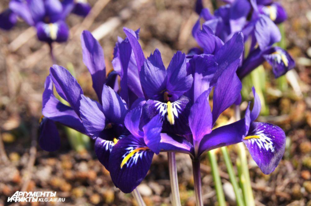Весна в Калининграде.