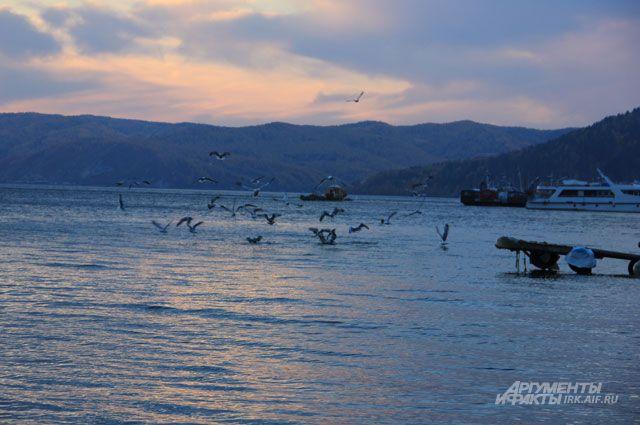 Природное обезвоживание. Почему мелеет Байкал и чем это грозит экологии