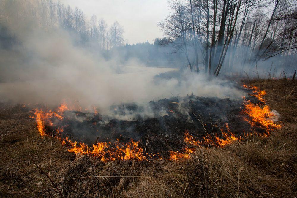 Пожар в Ново-Николаевском устроил местный житель, который хотел сжечь траву в огороде.