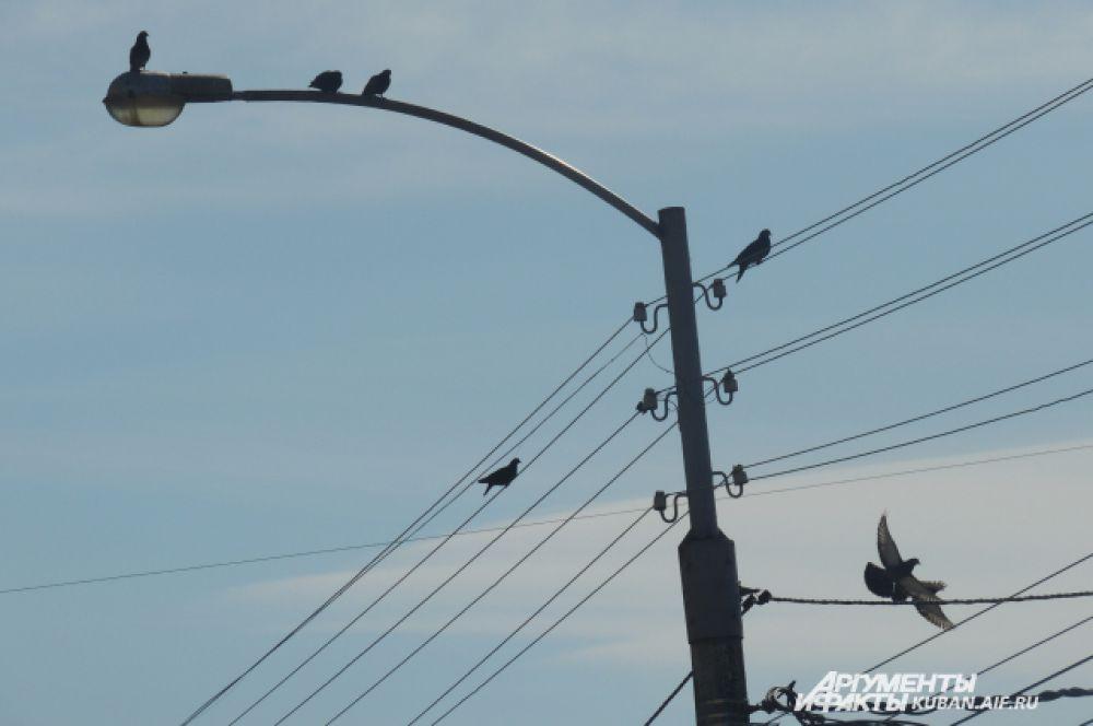 Голуби греются на фонарных столбах.