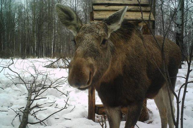 Селянин дважды выстрелил в дикое животное.