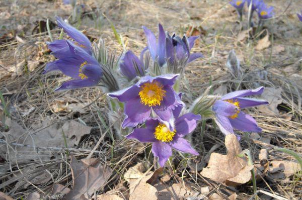 Цветы волгоградской области названиями, губка сколько стоит