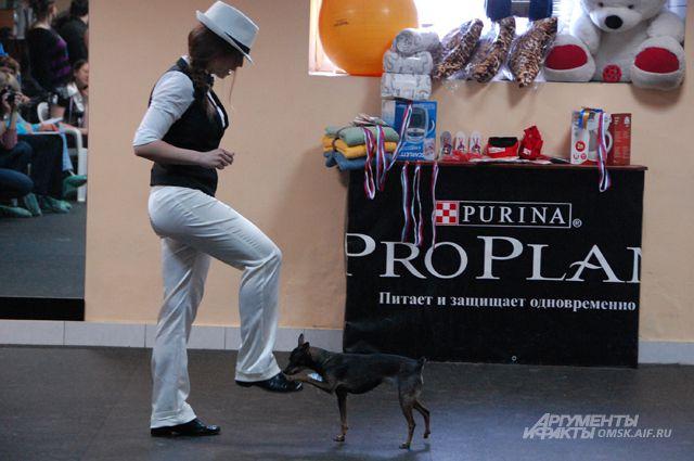 Омичи устроили танцы с собаками.