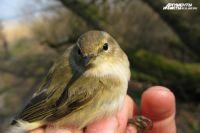 Над Куршской косой за сезон пролетают миллионы птиц.