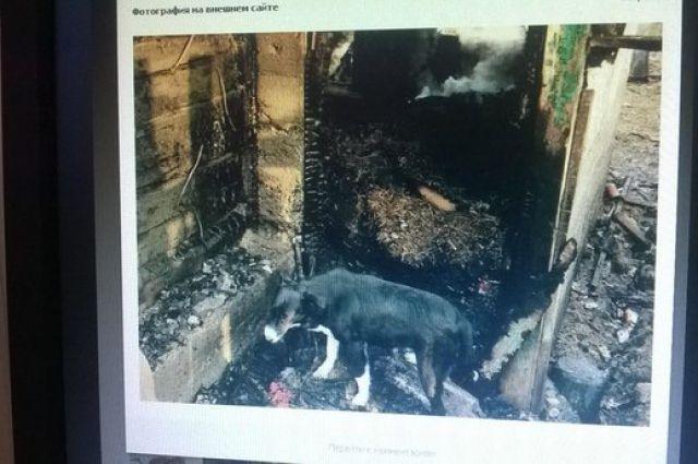 Приют сгорел и собаки остались без дома.