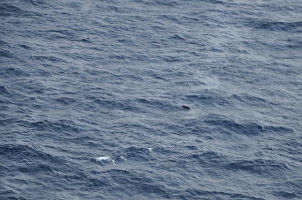Именно с вертолёта были обнаружены два полузатопленных плота.