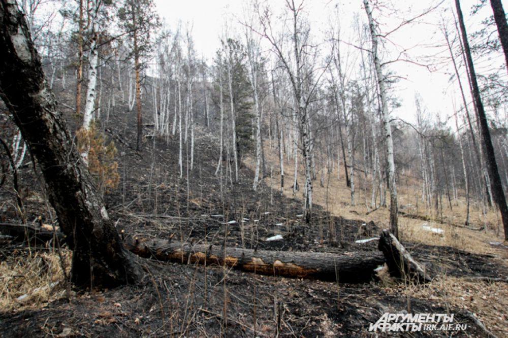 После огня лес выглядит так.