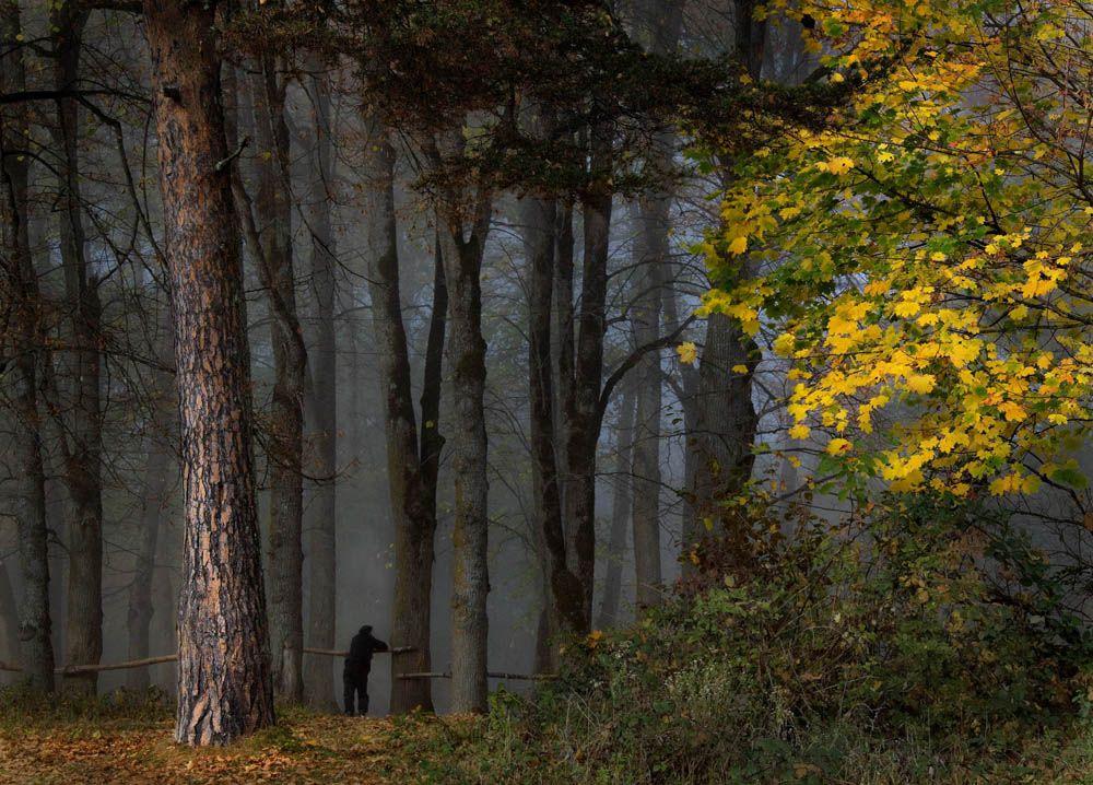 «Осенний лес»