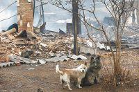 35 населённых пунктов пострадало от пожаров.