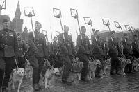 Минеры с собаками минно-розыскной службы на Параде Победы на Красной площади 24 июня 1945 года.