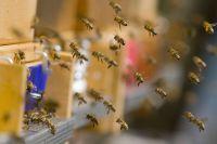 Тысячи пчел погибли