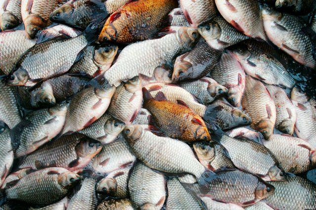 Рыба массово погибла в «Птичьей гавани».