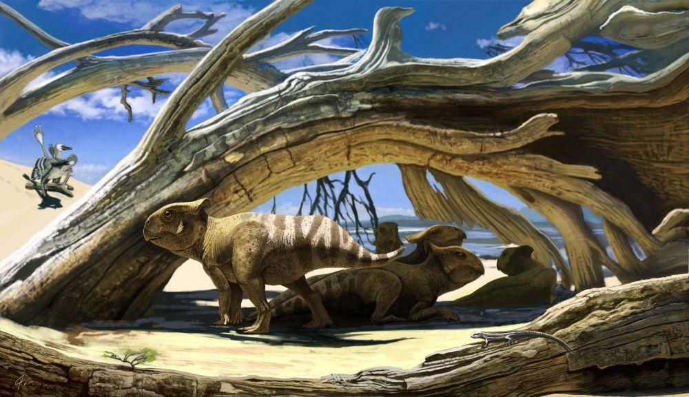 А эти протоцератопсы тоже могли быть нашими земляками. Обитали они всего около 80 млн лет назад. Большинство их останков найдено в Монголии. Не так уж и далеко.