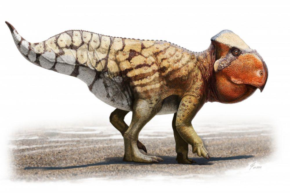 Например, вид уданоцертопса полностью основан на исследовании окаменелостей, оставшихся от его массивного черепа.
