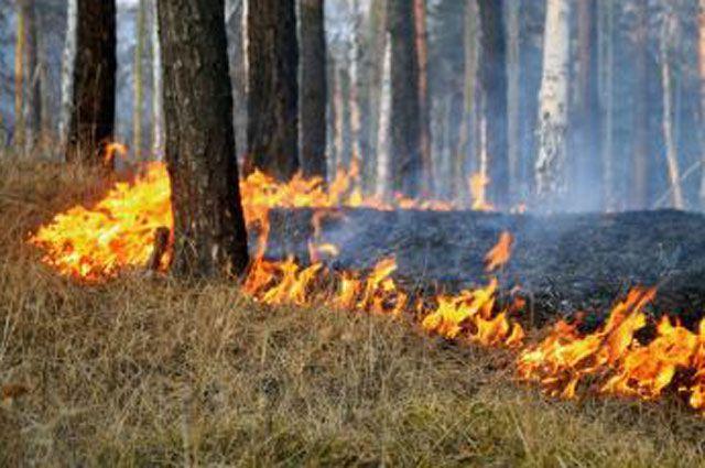 Лесной пожар разгорается быстро.