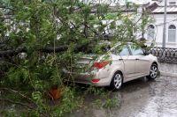 Автовладельцы не редко становятся потерпевшими от падения дерева.