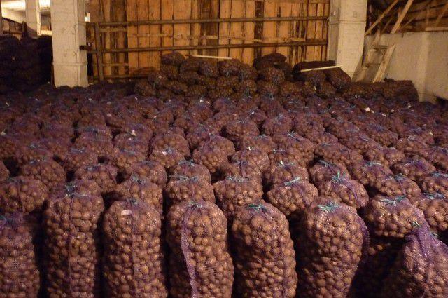 Выявить заражённый картофель смогут только в лаборатории.