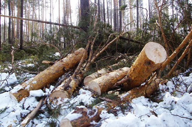 ткани, не законная вырубка деревьев в тобольске синтетических волокон