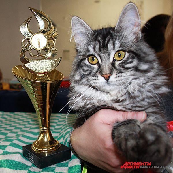 Чемпион среди котят - Желания Камчатская Легенда.